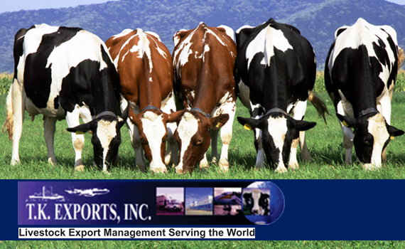 TK Export Inc (Cow Exporter from USA)